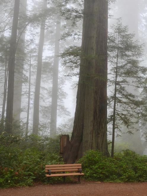 Redwoods National Park.