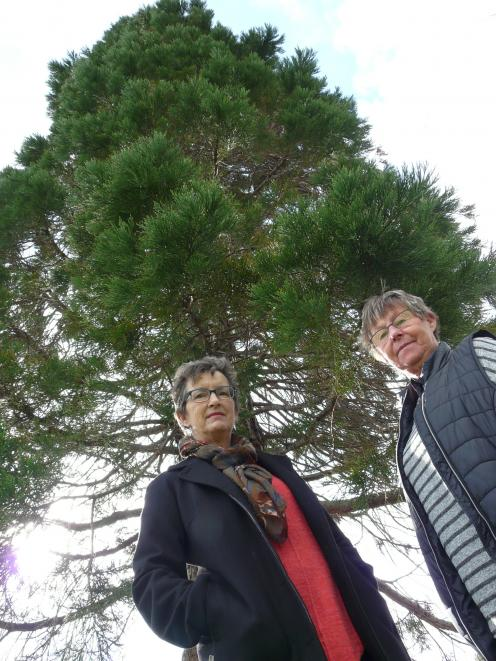 Balclutha residents Maxine Evans (left) and Lorraine Pringle are among those trying to prevent the Clutha District Council felling trees, including this 30m sequoia, in the town's Christie St playground. Photo: Richard Davidson