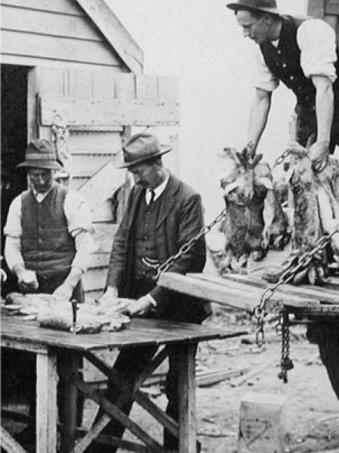 Robin Christie, of Roxburgh, sent in this rabbit-farming photo. It shows Sam McClelland, left, and Jack Sheehy of Millers Flat inspecting rabbit carcasses before loading them on to a wagon for transport to a processing factory. Photo: Robin Christie
