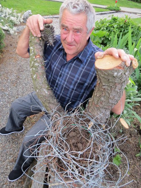 Owen Blanch, of Roxburgh, was surprised recently after cutting down a tree to find an old magpie nest made of farming wire. Various gauges were used, from old iron No 8 wire to haybale wire (baling wire), which is no longer in use, putting the nest's age