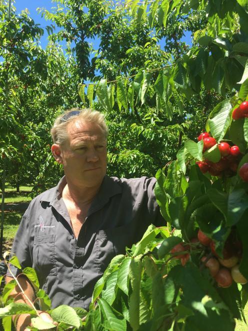 Fruit grower Mark Jackson tends to his crops. Photo: Adam Burns