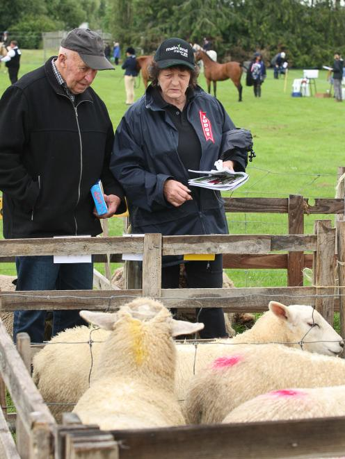 Judging the sheep  are Alan and Barb Gordon. Alan is a former Tokomairiro A&P  president.