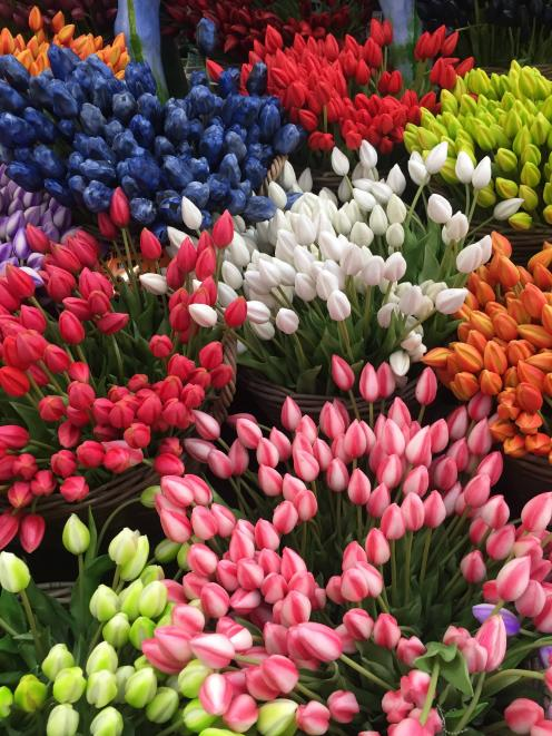 Tulips are ready for purchase at Amsterdam's floating flower market. Photos: Sarah Vilela da Silva