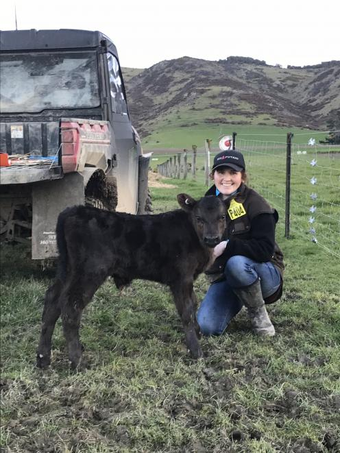 Kate McCallum with one of her young Angus animals. Rockley Stud focuses on selling bulls as yearlings.Photo: Rockley Angus
