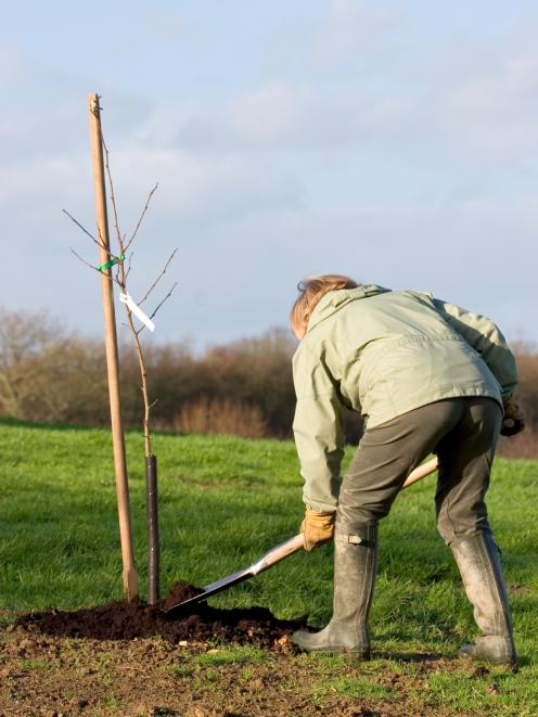 It's an ideal time of year for planting apple trees. Photo: Getty Images