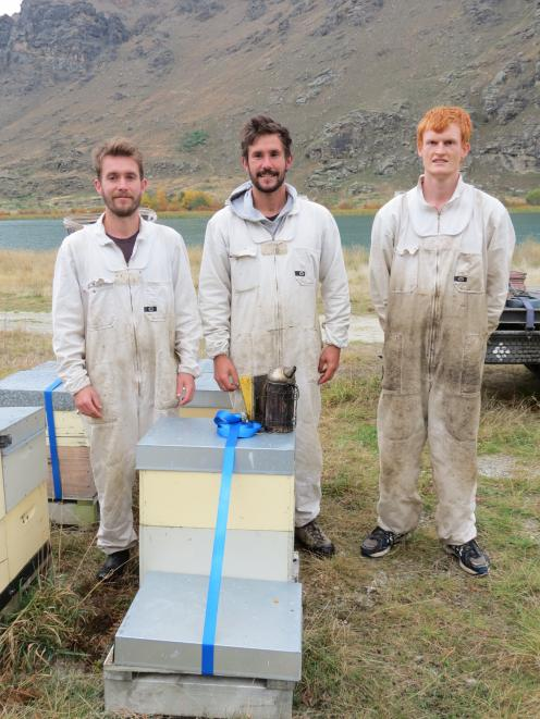 Tending to hives between Cromwell and Alexandra last week are apiarists from Alpine Honey, Hawea, (from left) Jeffrey Ward, Reuben Ward and Callum Frew, all of Hawea. Photo: Yvonne O'Hara