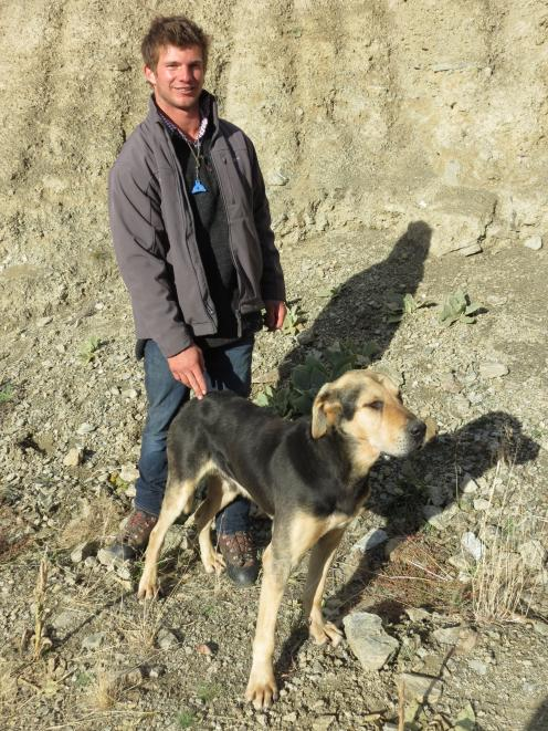 Huntaway Ben and his owner George Sheild watch competitors in the North Otago Centre dog trialling championships at Earnscleugh Station last week. More than a year earlier the dog had disappeared during an annual muster and he survived in the ranges until