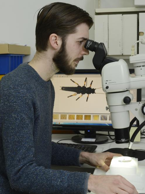 PhD student Brodie Foster, of the University of Otago's zoology department, examines a new...