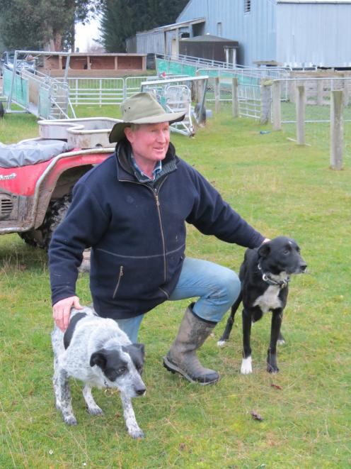 Brian Dickison, of Waikaka, said honest dogs were important for dog trialling success. Cole (left) and Mack are his top trialling team. Photo: Yvonne O'Hara