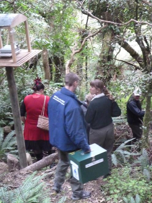 The release of the first eight Haast tokoeka at the Orokonui Ecosanctuary in October 2010. Photo:...