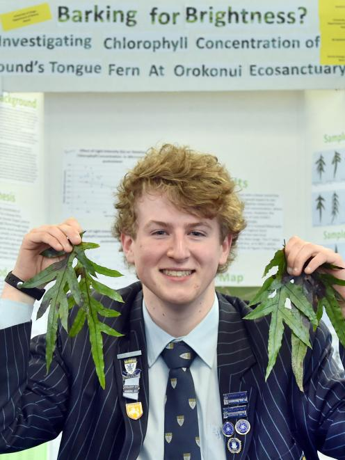 King's High School pupil Aaron Hewson with some of the Hound's Tongue Ferns he studied for his award-winning research at the recent Aurora Energy Otago Science and Technology Fair. Photo: Peter McIntosh