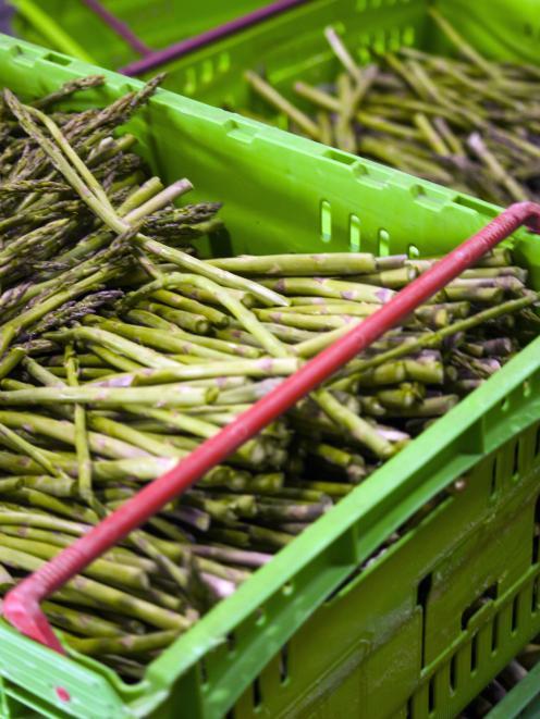 Harvested asparagus. Photo: NZAC