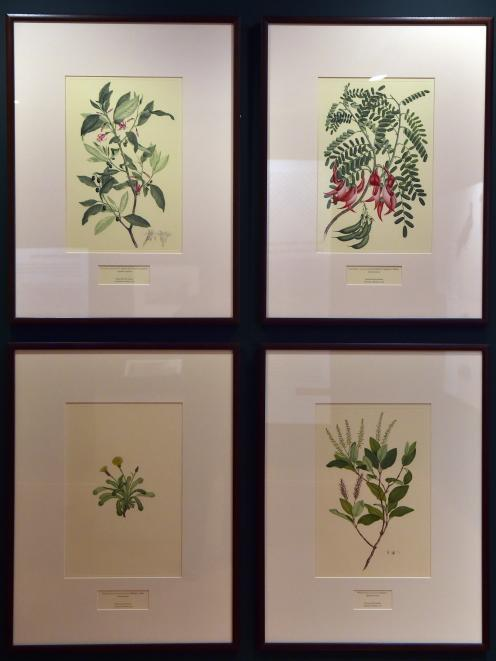 Botanical works by Sydney Parkinson and Joseph Banks.