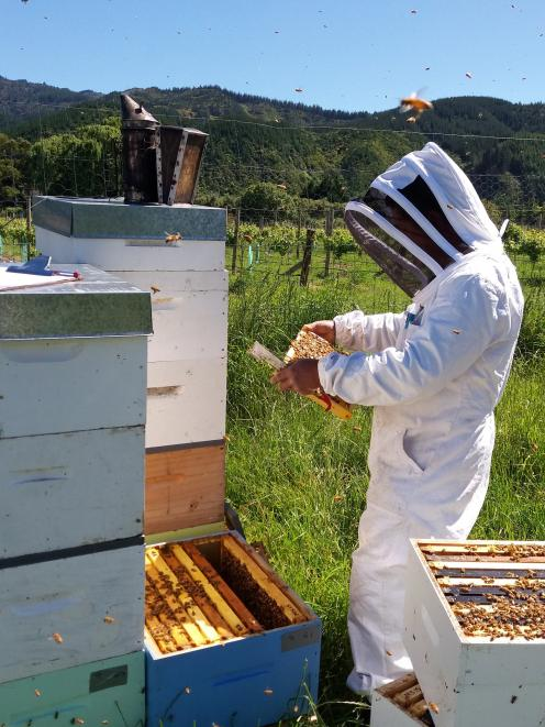 Gathering useful data about honeybees presents obvious challenges. PHOTO: SUPPLIED