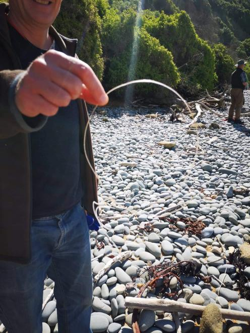 The offending nylon line that had ensnared the seal.