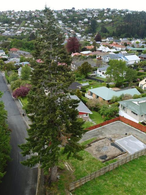 Neighbours are fighting to save a 34m-high European silver fir tree that towers over Ferntree Dr in the Dunedin suburb of Wakari. Photo: Stephen Jaquiery