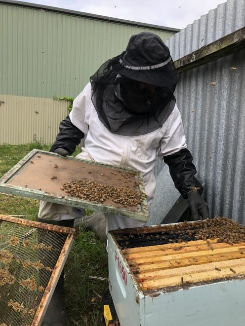 Southland beekeeper Geoff Scott removes bees from an urban Invercargill yard. Photos: Laura Smith