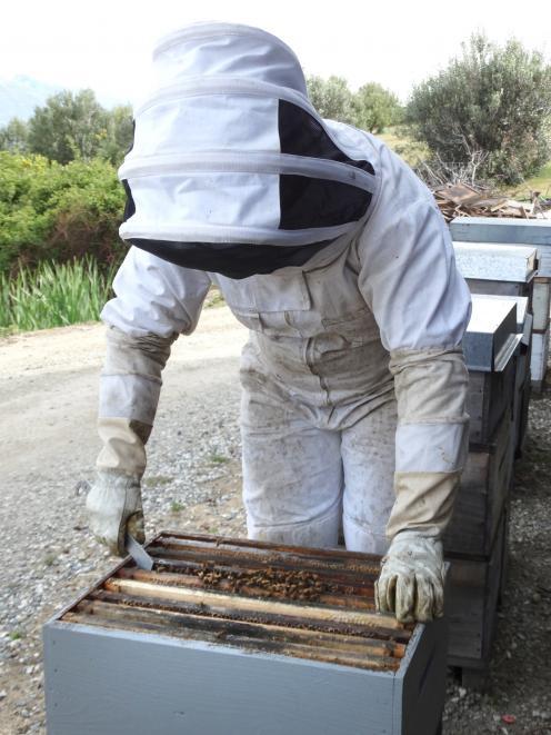 Cromwell beekeeper Sharleen Coker checks her hives.