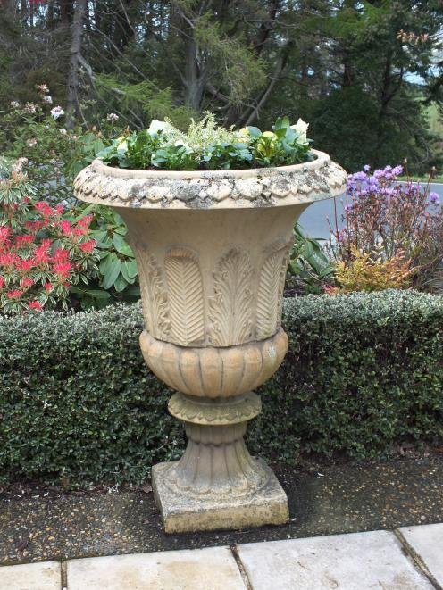 Different plants have been tried in this urn to get the optimum effect.