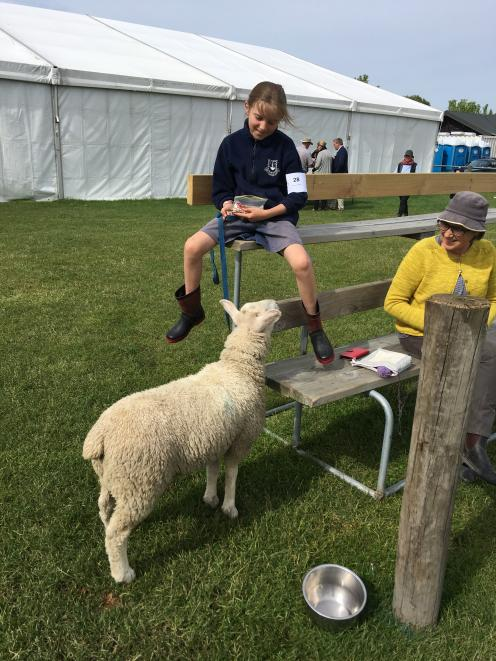 Daizy the lamb is interested in what Southbridge School  pupil Kate Maginness (10)  has in her bag, while mum Taryn looks on. Photo: David HIll