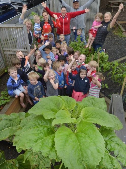 Taking out the regional top spot for tallest sunflower was Mosgiel Central Kindergarten. PHOTO:...