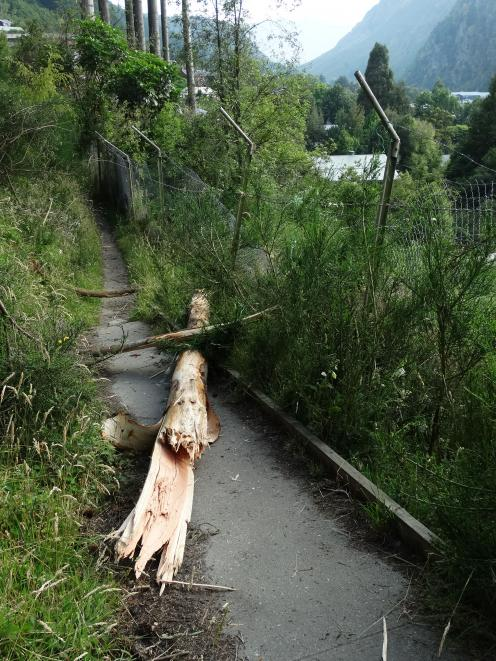 Part of a tree that fell across a public walkway into the Kiwi Birdlife Park in Queenstown, damaging a fence. Photo: Guy Williams