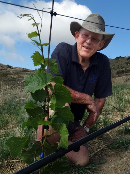 Retired viticulturalist Robin Dicey with a chardonnay vine which has withstood this year's summer...