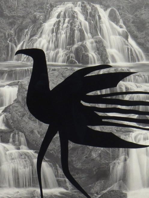 Black Haast, by Paul McLachlan