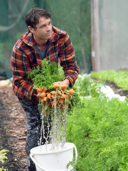 John McCafferty rinses newly harvested produce from his Pleasant River operation. Photo: Stephen...