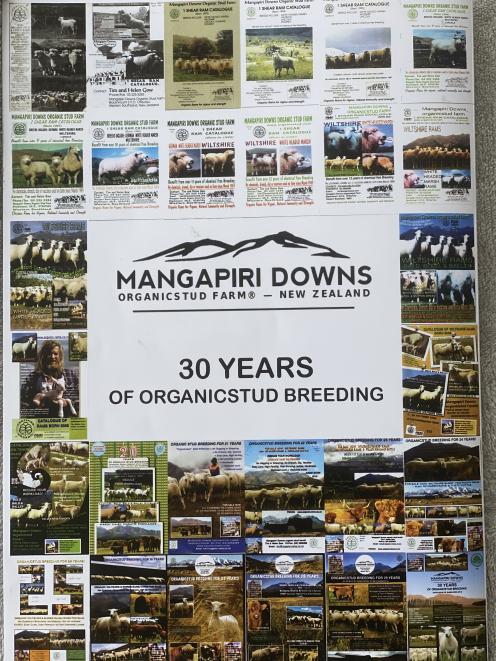 This year marks 30 years of stud breeding for Mangapiri Downs stud farm.