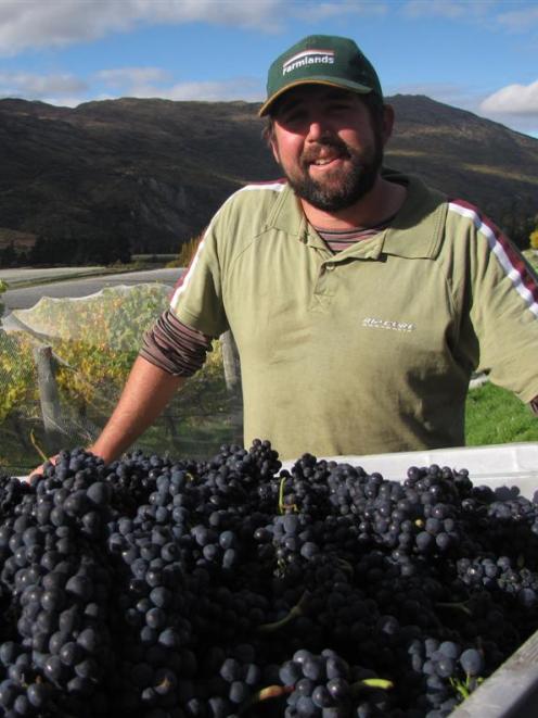Peregrine viticulturist Nick Paulin at the winery's Gibbston vineyard yesterday.  Peregrine has...