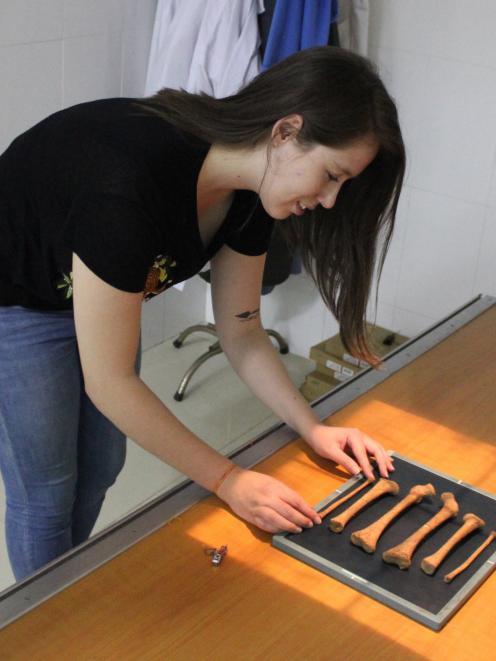 Bioarchaeology PhD student Melandri Vlok examines ancient bones. PHOTO: SUPPLIED
