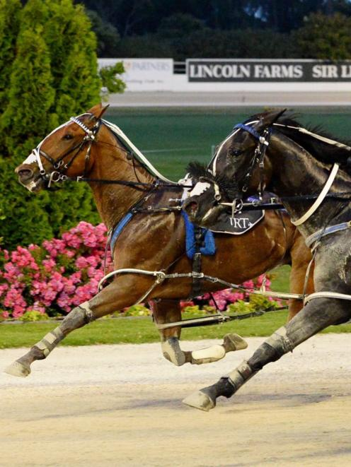 Ultimate Sniper heads a powerful five-horse team the All Stars Stable has in the Interdominion...