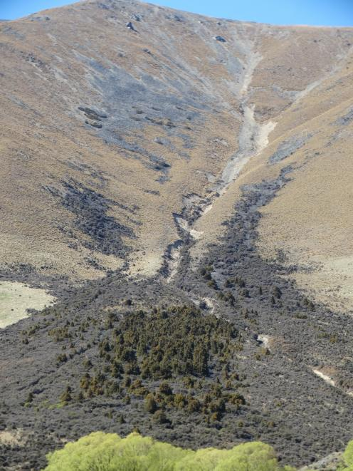 The remains of a totara forest north of the Lindis Pass.