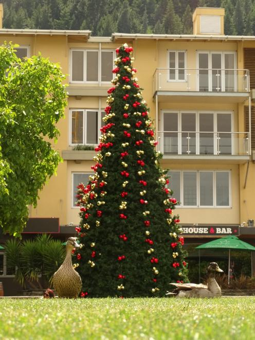The Christmas tree in central Queenstown went up in its usual spot on the Village Green in Athol...