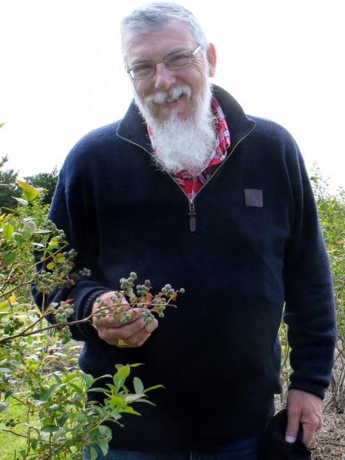 Blueberry Country general manager Simon Bardon is hoping to get about 150 pickers for its busy...