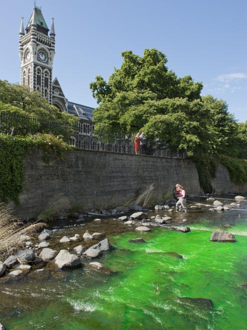 Dye is released into the Water of Leith yesterday as part of an educational exercise organised by...