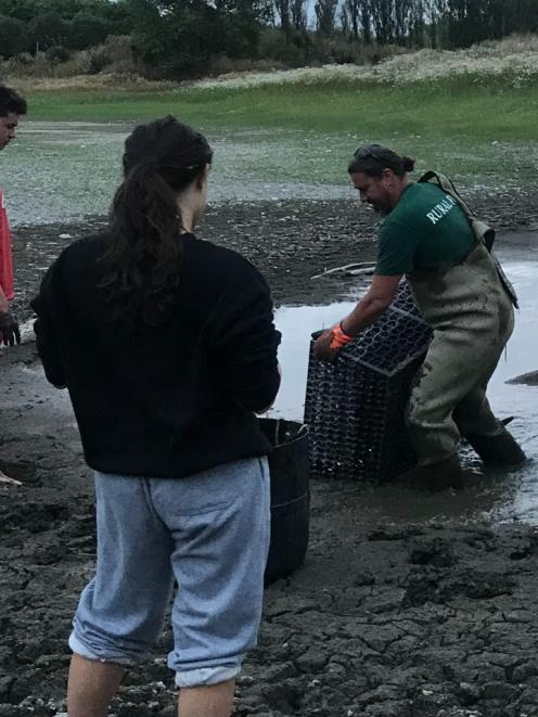 The eel recovery unfolded in the muddy remains of Whites Pit. Photo: Supplied