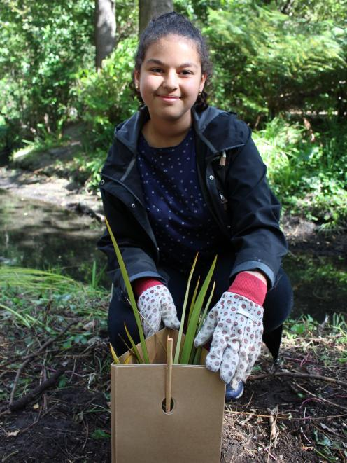 Year 10 student Maria Iskander plants a native harakeke at the Avon River. Photo: Supplied