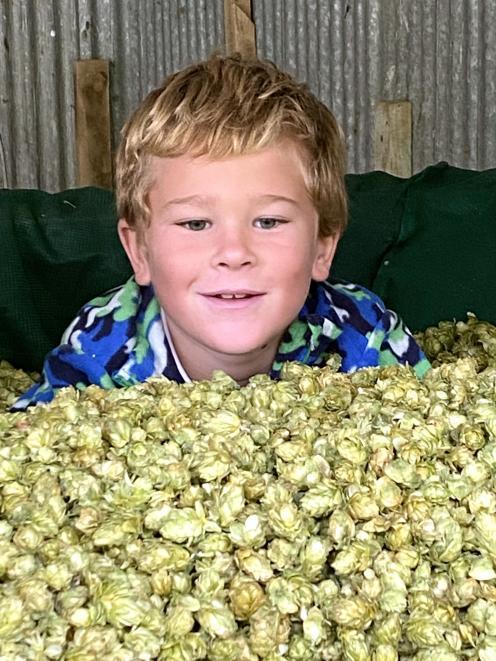 James  McNamee (8) immerses himself in hops.