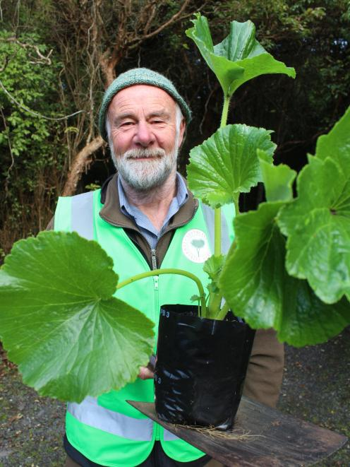 Southland Community Nursery volunteer Ray Jackson, of Otatara, holds one of the punui which was...