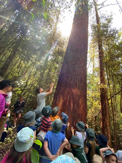 A rimu is a source of wonder for young nature learners.  PHOTO: OROKONUI ECOSANCTUARY
