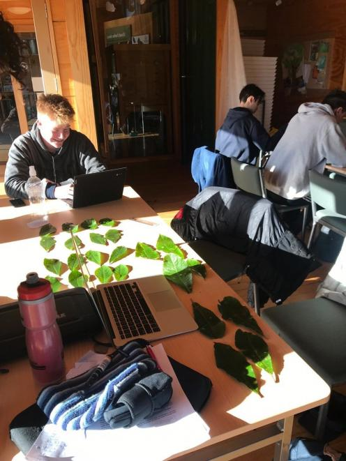 Art Hurring records data to calculate leaf surface area.  PHOTO: VICKI JOPSON
