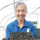 Volunteer Dhana Pillai, of Alexandra, holds a tray of germinated native seeds at the Clyde...