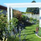 Elaine Schreiber's New Plymouth garden is just four years old. Photos: Gillian Vine.
