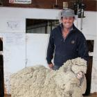 Matakanui Station owner Andrew Paterson with escaped sheep Mr T, who grew 21kg of wool.PHOTOS:...
