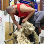 Shearing is a tough occupation and, for Nathan Stratford, it's getting increasingly harder: '...