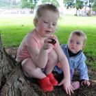 Anoushka (3) and Freda (11 months) Knox place painted rocks under a tree in a park in Caversham, Dunedin. Photos by Christine O'Connor.