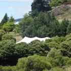 A white marquee peaks through the trees at the Olive Grove wedding venue in Wanaka. PHOTO: TIM...