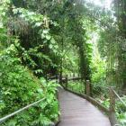 The boardwalk at the entrance to the Hawaii Tropical Botanical Garden. Photo: Pam Jones.